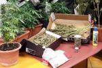 Chiama i carabinieri per una lite, ma dimentica di nascondere la marijuana
