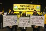 Cimice killer, Rovigo la seconda provincia più colpita
