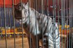 Arriva a Rovigo il circo con gli animali