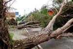 Il vento ha abbattuto file di alberi in strada