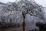 Nebbia e galaverna: l'inverno si fa sentire