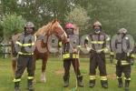 I pompieri salvano l'anziana cavalla