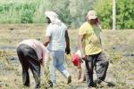 Il Covid alimenta il lavoro nero