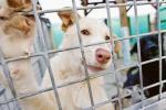 La truffa sugli animali: finti volontari della Lega del Cane girano per le case
