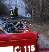 La pineta brucia, i pompieri la salvano. Sospetto dolo