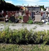 Erbacce padrone del cimitero monumentale: monta la rabbia in città