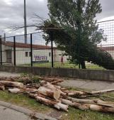 Il vento abbatte un albero nel parcheggio del Battaglini