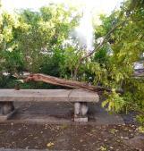 Raffiche di vento, cade un albero in piazza Merlin