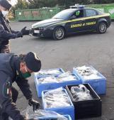 Sequestrati 145 chili di tartufo nero in arrivo dalla Romania