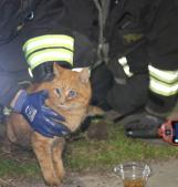 Micio intrappolato nel tubo di scolo, lo salvano i pompieri