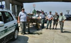 Pesca abusiva, liberati dieci chili di anguille e centinaia di granchi