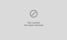 """""""Aumenta il numero di gatti abbandonati e delle cucciolate"""""""
