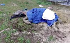 Cavalli abbandonati in fin di vita, interviene la nipote di Berlusconi