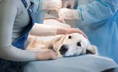 La Regione Veneto pagherà le cure agli animali con padroni poveri