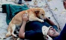 Cane salva il padrone dall'assideramento