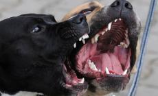 Sfigurata la bimba aggredita dai cani