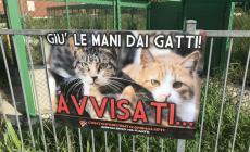 """""""La gattara Rina va aiutata, non osteggiata"""""""
