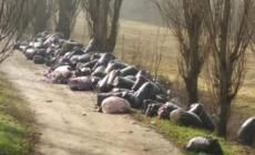 Getta sacchi di scarti tessili per strada: beccato un cinese