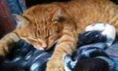 Oggi, giornata mondiale del gatto: e che festa sia....