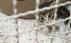 Lavori all'oasi felina di Rovigo: un posto a misura di gatto