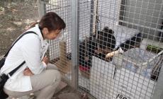 Partiti i lavori lavori di sistemazione all'oasi felina di Rovigo