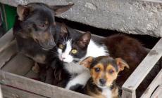 Un bonus per aiutare le famiglie in difficoltà a mantenere cani e gatti