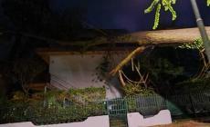 Strage di alberi, cadono su case e auto: danni