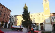 Il grande albero di Natale è arrivato