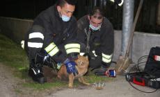 I pompieri salvano un gattino bloccato in un tubo di scolo
