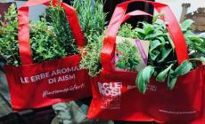 Piante aromatiche su prenotazione a sostegno di Aism