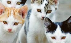 """""""Troppi gatti investiti negli ultimi 40 giorni"""""""