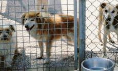 57 cani in casa: scatta il maxi sequestro