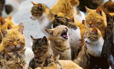 """""""Automobilisti irresponsabili: troppi i gatti investiti in questo periodo di quarantena"""""""