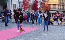 Pomeriggio da cani in piazza
