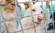 """Contro il maltrattamento degli amici animali: """"Li difenderemo tutti"""""""