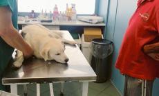 Una raccolta fondi per salvare il cane Arturo