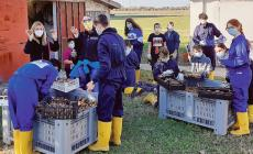 Ladri all'istituto agrario portano via chili di kiwi