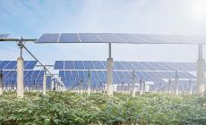 Fotovoltaico a Loreo, il Tar boccia il ricorso di Coldiretti