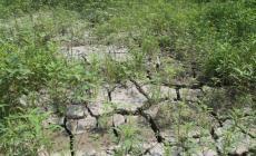 """Allarme siccità, """"Le ultime piogge consistenti sono cadute prima di Natale"""""""