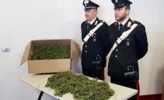 Era un 46enne agricoltore polesano il re della marijuana