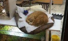 Il cartello: non disturbate il Rossini che dorme