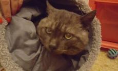 Morto il gatto seviziato dai ladri