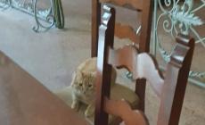 Il gatto Rossini arriva in udienza: ascolta la causa e poi si ritira