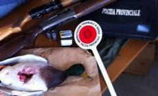 Fucili, cartucce sequestrate  <br/> e sei cacciatori segnalati