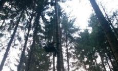 Si lancia col parapendio <br/> finisce incastrato tra gli alberi