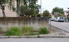Foreste sui marciapiedi<br/>e crateri nell'asfalto