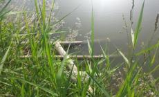 Un'oasi lasciata nel pieno degrado  <br/> tra via IV Novembre e via del Gelso