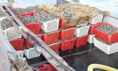 Contrasto alla pesca abusiva <br/> sequestrati 240 kg di vongole veraci