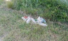 Piantamelon, rifiuti abbandonati <br/> la segnalazione di un cittadino