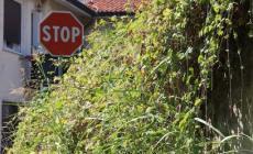 Ponte Marabin inghiottito dall'erba <br/> tra segnali che spuntano dal nulla